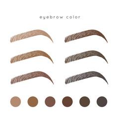 Eyebrow color vector