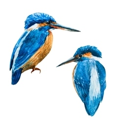 Watercolor blue kingfisher bird vector image