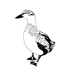 Black and white duck vector