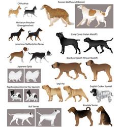 Dog show vector