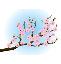 Oriental style painting cherry blossom in spring vector image