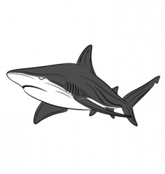vector shark tattoo vector image vector image
