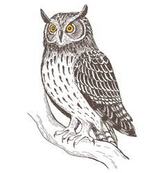 Realistic image of owl vector
