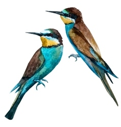 Watercolor european bee-eater bird vector
