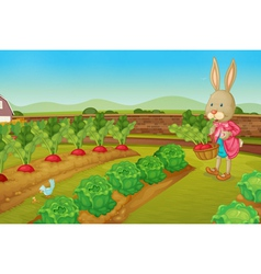 Rabbit picking vegies vector