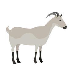 farm pet goat vector image vector image