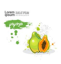 Papaya hand drawn watercolor fruit on white vector