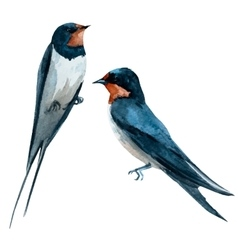 Watercolor swallow bird vector image