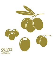 Olives set vector