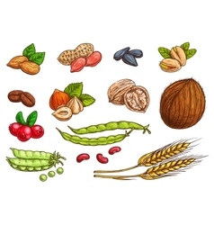 Nuts grain berries sketch elements vector image