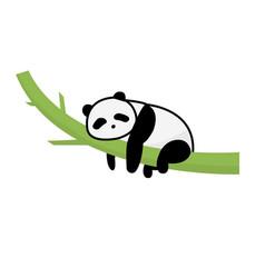 panda sleep on tree isolated whitepanda cartoon vector image