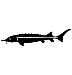 Silhouette of sturgeon vector image vector image
