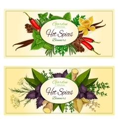 Hot spices seasonings spicy herbs banners vector