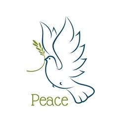 Dove or pigeon with olive branch vector