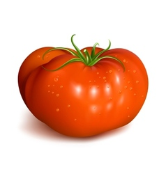 Red ripe tomato with waterdrops vector