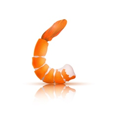 Shrimp on a white background vector