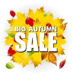 Seasonal big autumn sale business background with vector