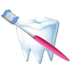 A toothbrush and a tooth vector