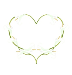 Beautiful white anthurium flowers in heart shape vector