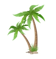 Two palms tree isolated vector
