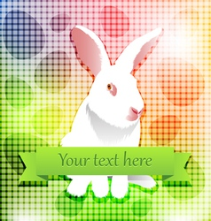Easter white rabbit over rainbow background vector image