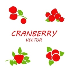 flat cranberry icons set vector image vector image