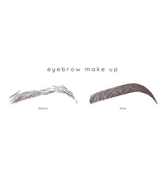 Eyebrow tutorial beautiful brow step by step vector