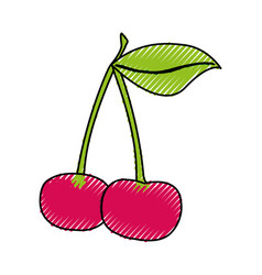 Cherry fresh fruit icon vector
