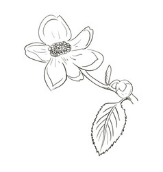 Beautiful flower draw vector