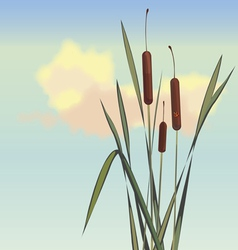 cane and small insects vector image