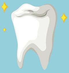 Healthy tooth in close up vector