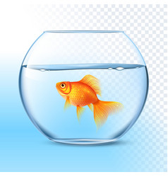 Goldfish in water bowl realistic image vector