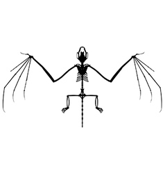 Bat skeleton silhouette vector image