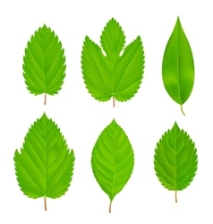 Green Leaves Isolated Set vector image vector image