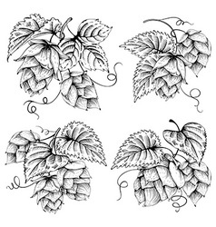 Hops graphics set vector image vector image