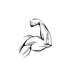 Arm muscles vector