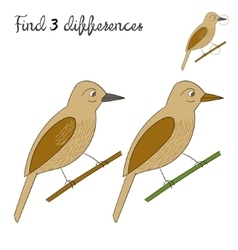 Find differences kids layout for game bird vector
