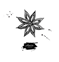 Anise star drawing hand drawn sketch vector