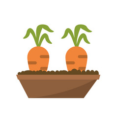carrot garden bed carrot image vector image