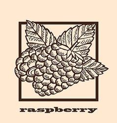 Hand drawn raspberries vector