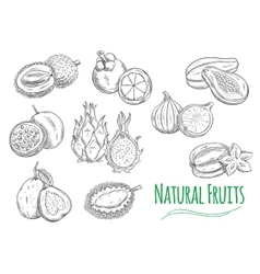 Exotic tropical fruits isolated sketch icons vector