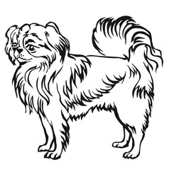 decorative standing portrait of japanese chin vector image vector image