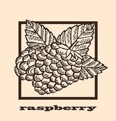 hand drawn raspberries vector image vector image