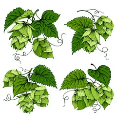 Hops graphics set vector image vector image
