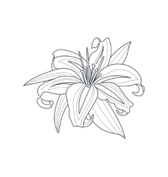 Lily flower monochrome drawing for coloring book vector