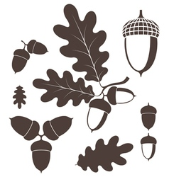 Oak Acorn vector image