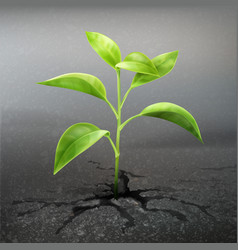 Plant sprout through asphalt vector
