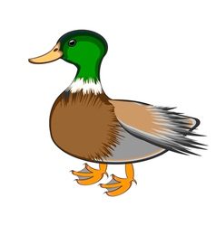 A duck on a white background vector