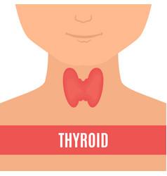 Thyroid gland of a man vector