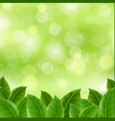 Green banner with leaves vector